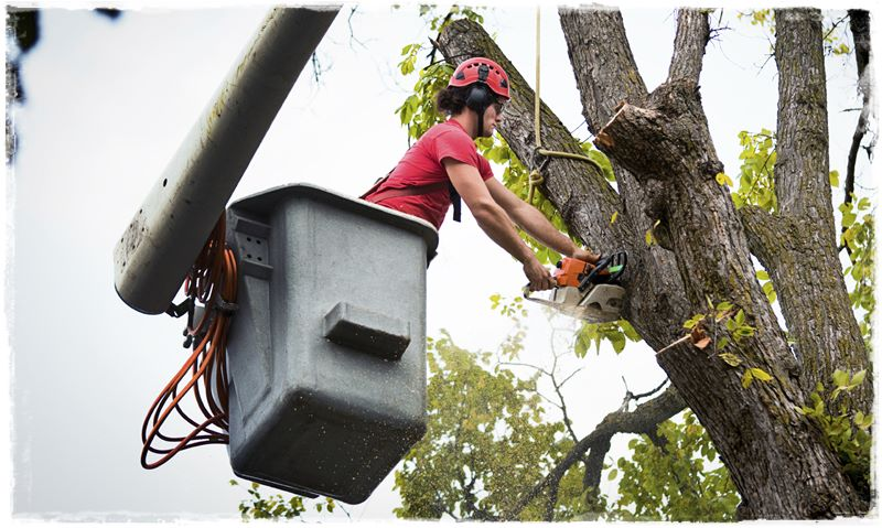 hp-tree-service-photo